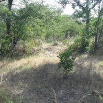 Photo of the Eastern Entrance on Earthwork 2. Luanze, Zimbabwe. Author and Copyright Chris Dunbar