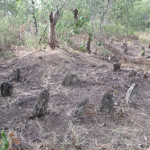 The marker stones from where the Portuguese built their houses, daga mud with pole imprints is still scattered on the ground. Luanze, Zimbabwe. Author and Copyright Chris Dunbar.