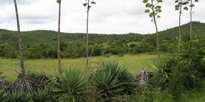 The outer trade grounds. Luanze, Zimbabwe. Author and Copyright Chris Dunbar