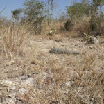Angwa Fort (3) looking at centre mound. Author and Copyright Chris Dunbar