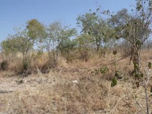 Angwa Fort (7) internal earthwalls. Author and Copyright Chris Dunbar