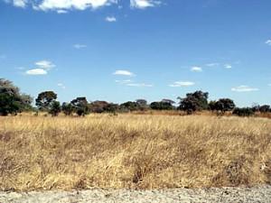 Feira site of Massapa now Baranda Farm