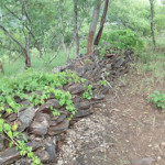 Schist walls at Shona site. Makaha, Zimbabwe. Photo © by Chris Dunbar