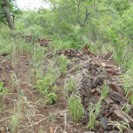 Schist walls at Shona site. Makaha, Zimbabwe. Photo © by Chris Dunbar (2)
