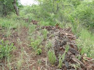 Schist walls at Shona site. Makaha, Zimbabwe. Photo © by Chris Dunbar (2)
