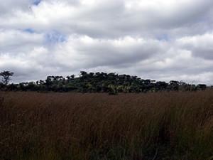 Site of minor Portuguese earthwork. Dambarare, Zimbabwe. Author and Copyright Chris Dunbar
