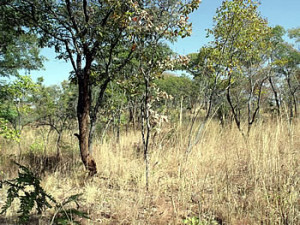 Standing on the ancient workings looking towards the feira site. Maramuca, Zimbabwe. Photo © by Chris Dunbar