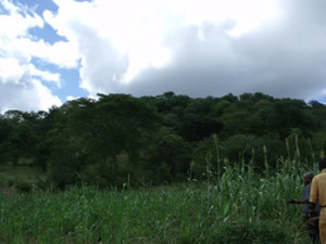 The hill site for the site which was Shona not Portuguese. Makaha, Zimbabwe. Photo © by Chris Dunbar