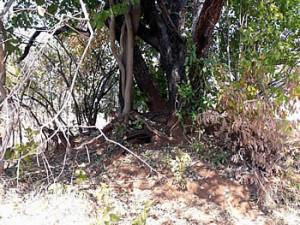 The infamous ant hill. Maramuca, Zimbabwe. Photo © by Chris Dunbar