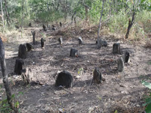 The marker stones from where the Portuguese built their houses, daga mud with pole imprints is still scattered on the ground. Luanze, Zimbabwe. Author and Copyright Chris Dunbar..