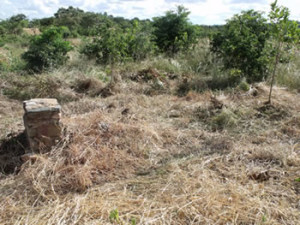 The site of the Church after we cleared the trees and grass. Daga mud with pole imprints was very visible. Luanze, Zimbabwe. Author and Copyright Chris Dunbar